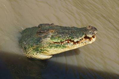 オーストラリア北の果て そこに恐怖の川
