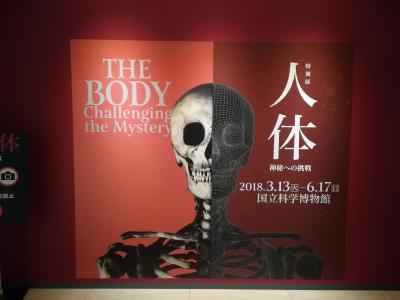 【2018】夜行バス利用◆国立科学博物館 特別展『人体~神秘への挑戦~』と鎌倉観光に行ってきた【街歩き】
