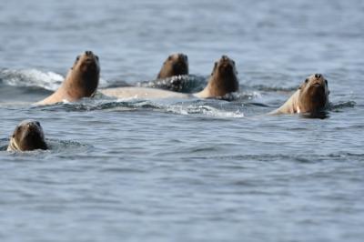 ぐるっと北海道周遊その4 羅臼りんくるのヒグマクルーズ