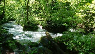 青森新緑の奥入瀬渓流:一日目 弘前城
