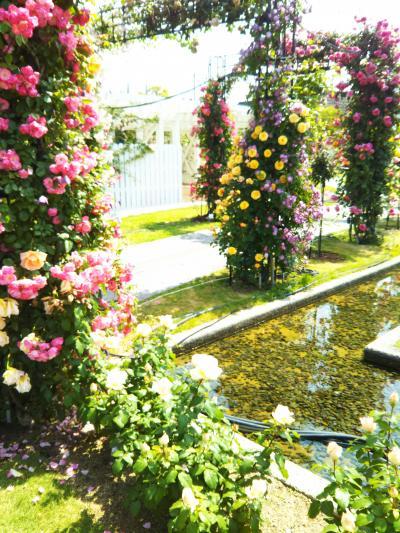 薔薇祭りとホテルヨーロッパ バラに包まれ幸せ