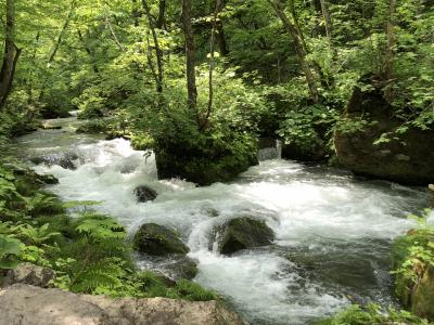 新緑の東北ハイライトツアー2泊3日の旅 2日目 奥入瀬渓流 十和田湖
