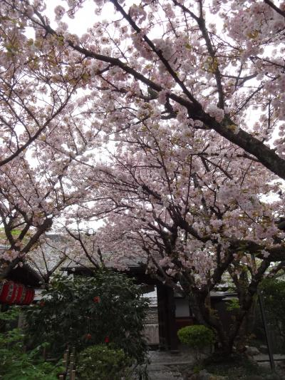 ☆2018年桜旅 第1弾! 18きっぷで京都へ☆京都 No3