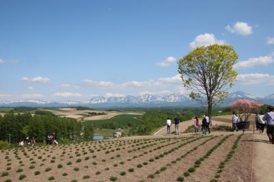 初夏の北海道(2泊3日)