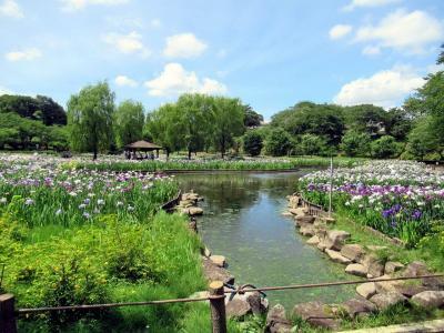 守谷の花菖蒲とアサヒビール工場見学