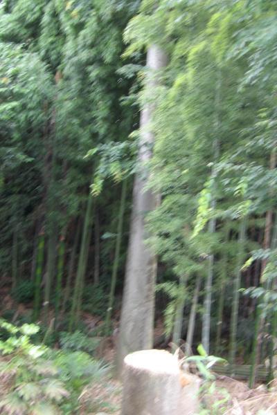 八木家の欅林(相模原市緑区下九沢)