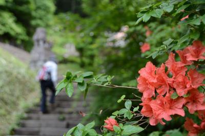 梅雨の合間、霊山戸隠に花トレッキング