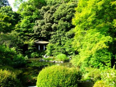 京都のホタルはどこにしようかと迷いながら・・・!2018年