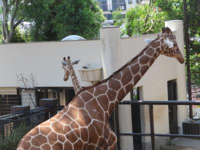 横浜市立野毛山動物園内を散策