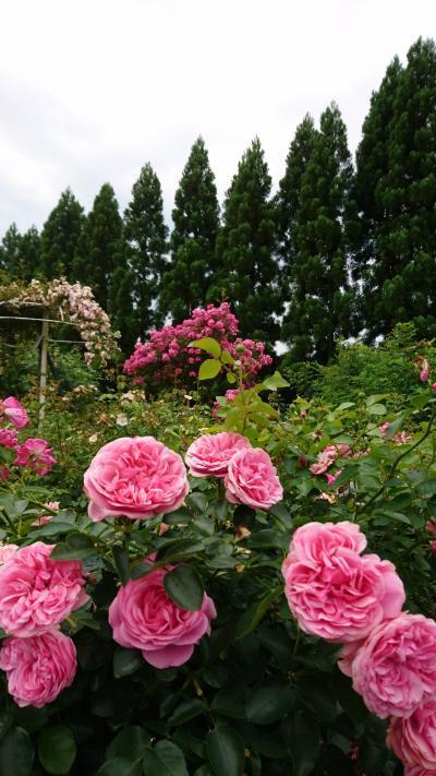 広島☆お花と美術館とかわいいカフェ