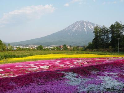 1日散歩切符を使って2つの花名所へ(追分町の菜の花ウォーキング&三島さんちの芝桜)