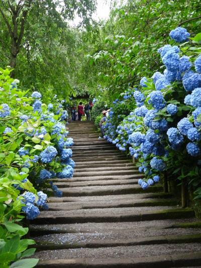 2018年(平成30年)6月 鎌倉の旅(明月院の旬の紫陽花と天園ハイキング(やぐら等)と覚園寺を拝観しました。)