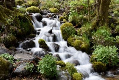 夏鳥来たかな?新緑の栃木 県民の森と尚仁沢湧水へ