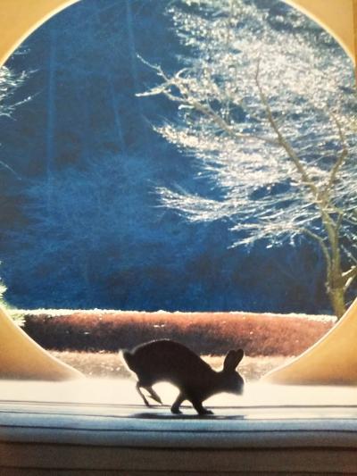 鎌倉プチ散策②~予習不足のまま行った『明月院』・『東慶寺』『鶴岡八幡宮』・『モアナマカイ珊瑚礁』