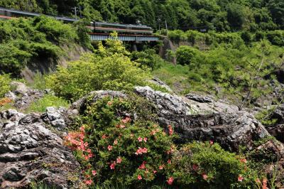 岐阜の撮影スポットを周る♪ 岩ツツジの飛水峡、モネの池、21世紀の森♪