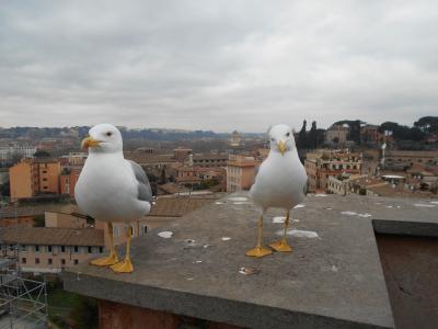 七十路夫婦のイタリア旅行1