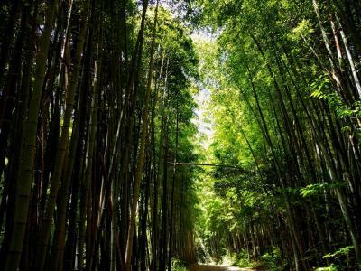 伏見桃山から醍醐寺まで