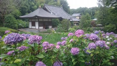 ジモティには有名な紫陽花、花しょうぶの名刹