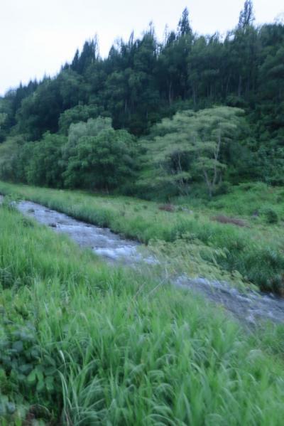 小野川温泉(米沢市)でホタル観賞