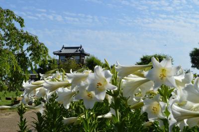 大阪池田☆梅雨の晴れ間に お花で華やかに~♪