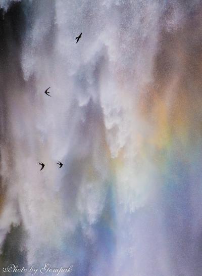 月明りに輝く夜霧とワタスゲの戦場ヶ原&華厳の滝の虹の中を飛び回るイワツバメ