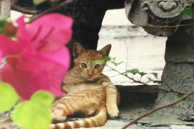 回顧バンコク2005年 夏休みに香港からふらり・・