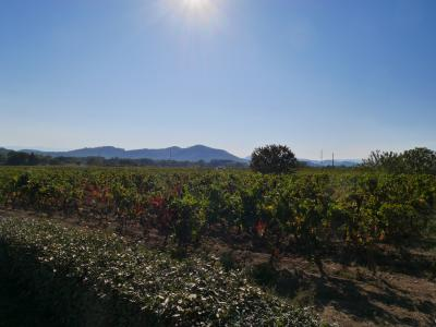 2017南仏ドライブ旅行(8):2日目ロングLorgues ~プロヴァンスワインの畑~
