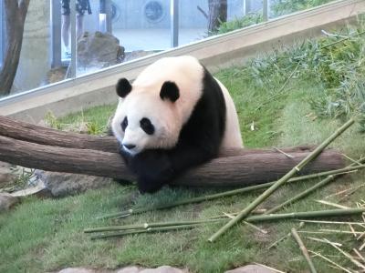 母との3人旅2018 南紀白浜でパンダを満喫の三日間