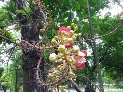 タイ バンコク ラマ9世公園