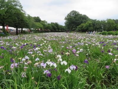 伊勢崎の華蔵寺公園から赤堀花しょうぶ園まで歩きました