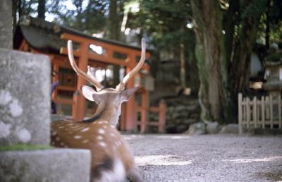 奈良 2 東大寺って凄いね。。。