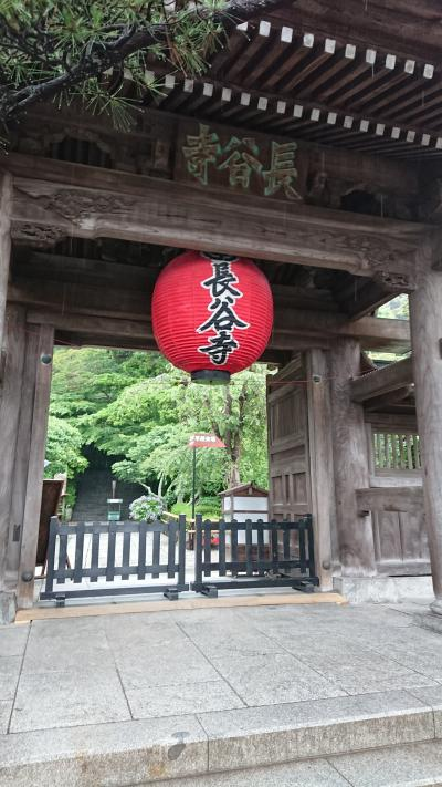 鎌倉雨に濡れたあじさい見物の旅201806パート1(長谷寺とあじさい編)