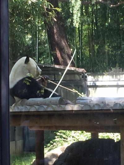 2018GW 母子旅行① in上野動物園 TDRの前泊アパホテル潮見駅編