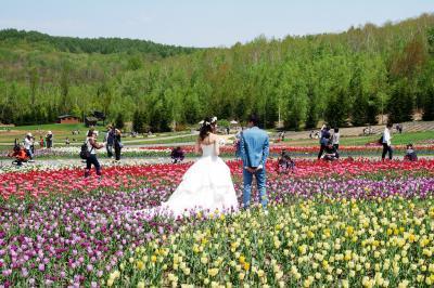 439-春の滝野すずらん公園…満開のシラネアオイと咲きはじめのチューリップ畑