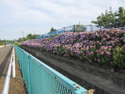 横浜市都筑区水と緑の散策K 都筑の原風景をめぐり、あじさい緑道を歩くコース