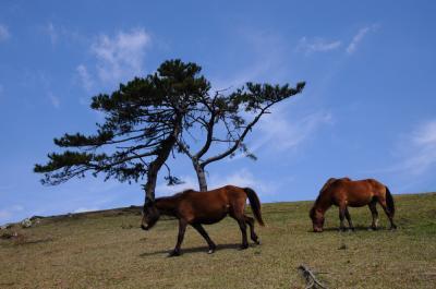 13年を経て日南を巡る【4】~野生馬群れる都井岬~