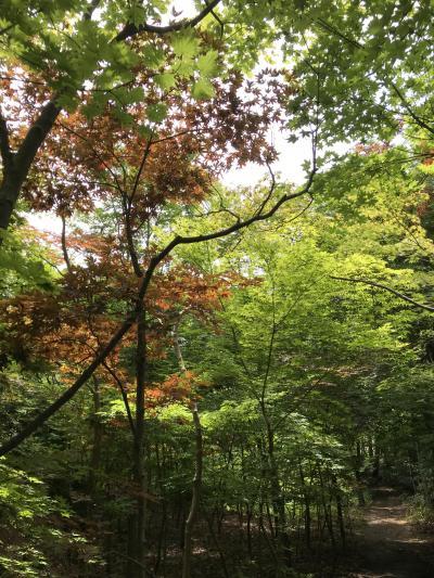 梅雨の晴れ間の紅葉~おまけのアジサイとユリ