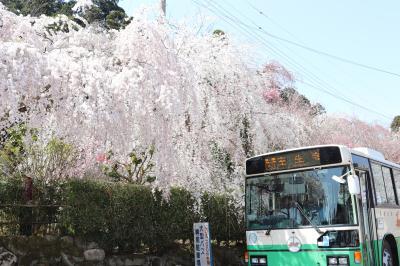 八ノ一 春の奈良~室生・明日香(桜と御朱印)