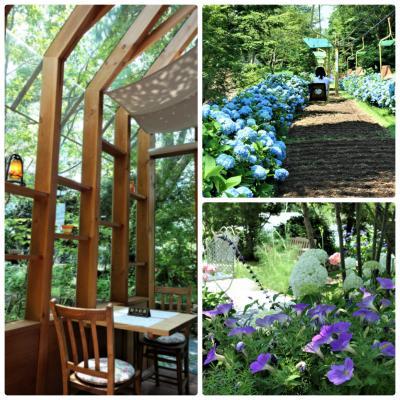 リフトから紫陽花と「野間の森MIGIWA」で木洩れ日ランチ