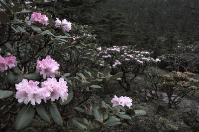 独特の文化や風習が今も息づく「老君山」シャクナゲの咲く大地を歩く