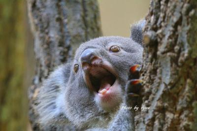 東山動物園 5月中旬から6月下旬までをまとめて!!
