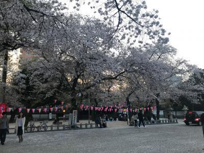 川越のお花見散歩(2018年3月)
