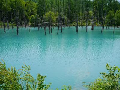 青い池の神秘*北海道絶景満喫旅@青い池*しらひげの滝*BETWEEN THE BREAD*まん作*ファーム富田