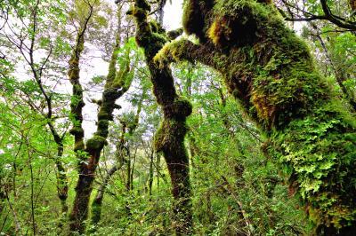 ニュージーランド旅行・トンガリロ国立公園