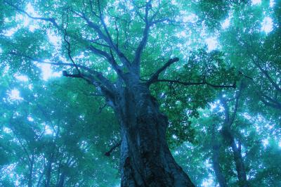 新緑に癒された5月の東北旅行 (3)白神の森を独り占め
