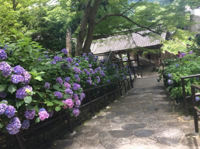 奈良てくてく旅行!紫陽花と商家町を訪ねて…ひとり旅編!