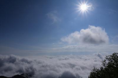ルピナス咲く頃北海道秘境の旅3日間♪ 3日目津別峠の雲海 ノンノの森のクリンソウ