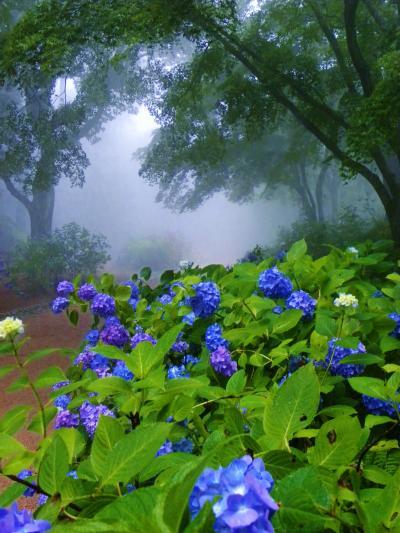 霧の六甲山!神戸市立森林植物園~六甲ガーデンテラス~六甲オルゴールミュージアムヘ!