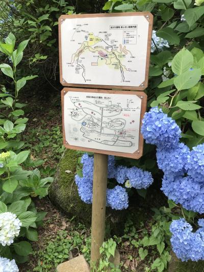 生駒アジサイ園(ぬかた園地)へしっとりハイキング