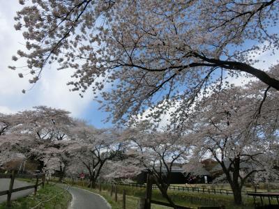 伊香保へ日帰りドライブ(2018年4月)